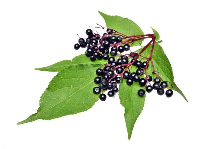 elderberry-Getty Images-Adam88rx